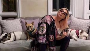 Lady Gaga recupera sus perros sanos y salvos